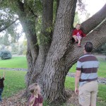 she loved to be placed in trees.  she screeched when he took her down.